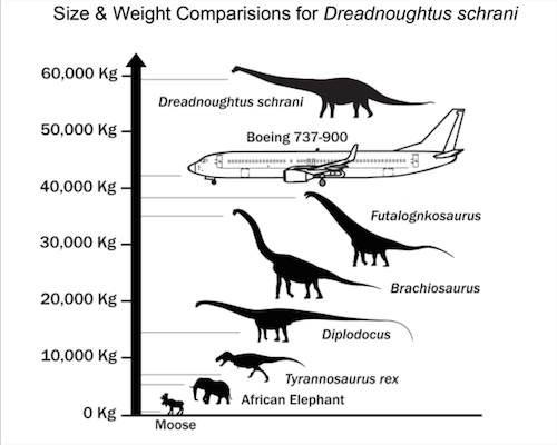 Dreadnoughtus sure was heavy.